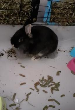 Regalo conejo enano