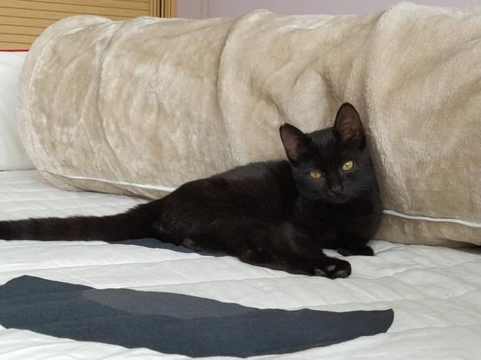 Mika - gato en adopción
