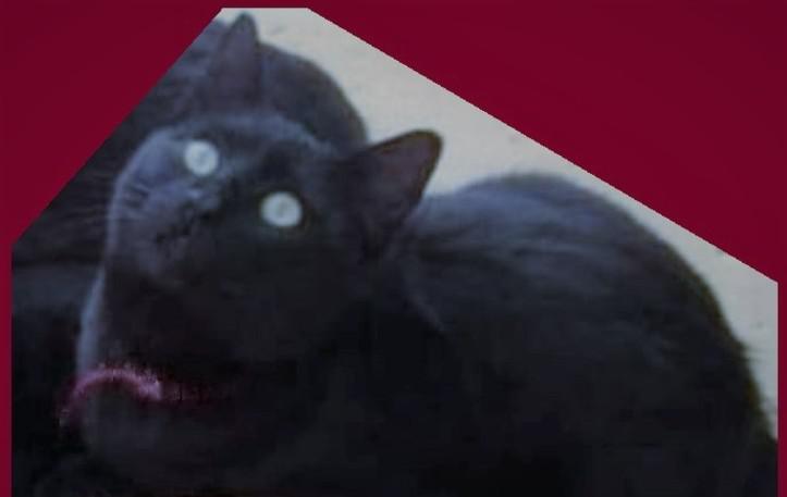 Perdido mi gato pépère
