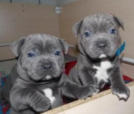 Cachorros del personal en adopción.
