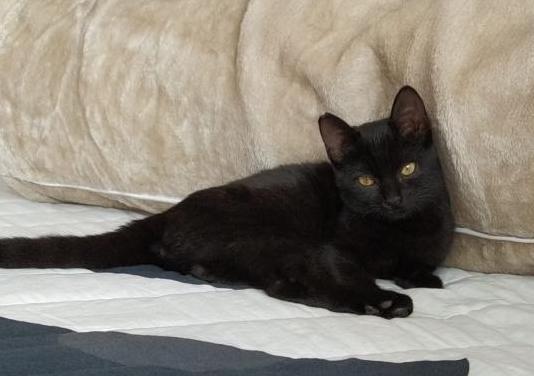 Mika gatita de 4 meses en adopción