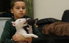 Preciosos cachorros de bull terrier son cachorros