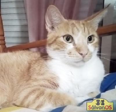 March - gato en adopción