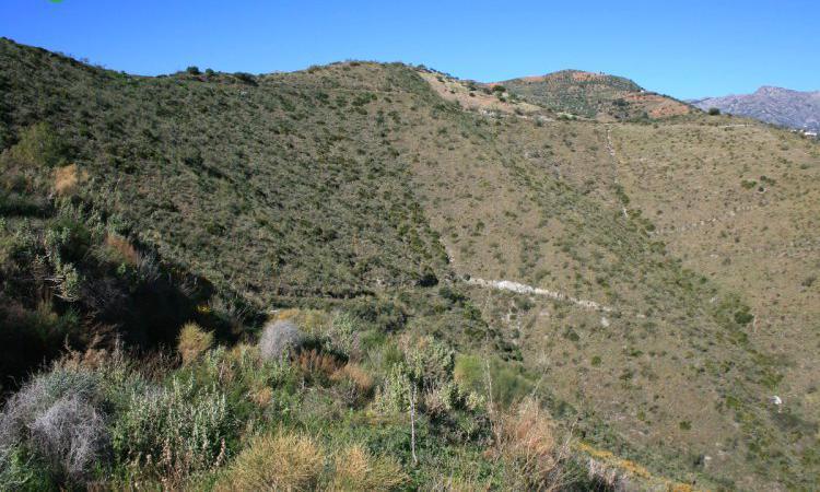 Venta de Finca para aguacates o mangos en Granada