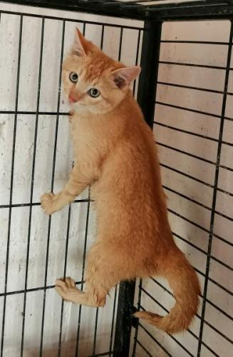 CAOS - gato en adopción