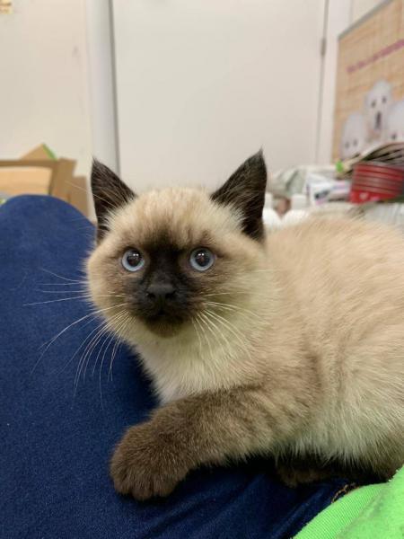 Eiffel - gato en adopción