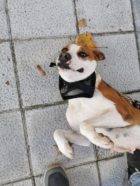 Nebula - perro en adopción