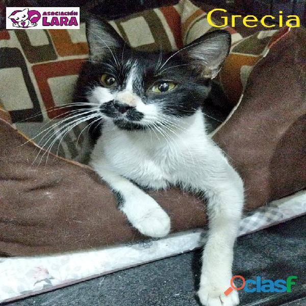 Grecia, cachorrita en adopcion