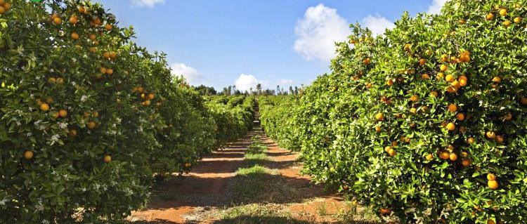 Venta de Finca de naranjos en Castellón
