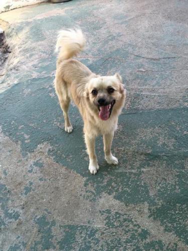 Sebas - perro en adopción