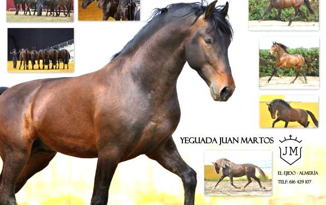 Venta de caballos pura raza española en almería