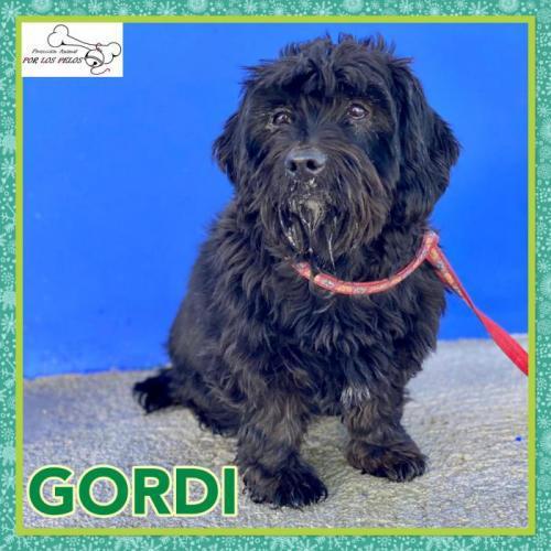Gordi - perro en adopción