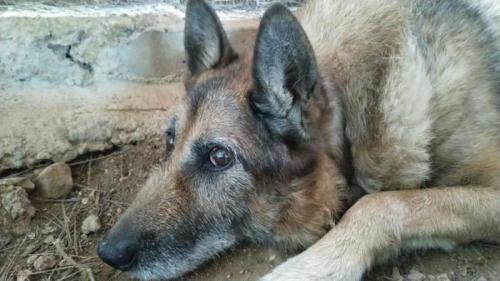 Yako - perro en adopción