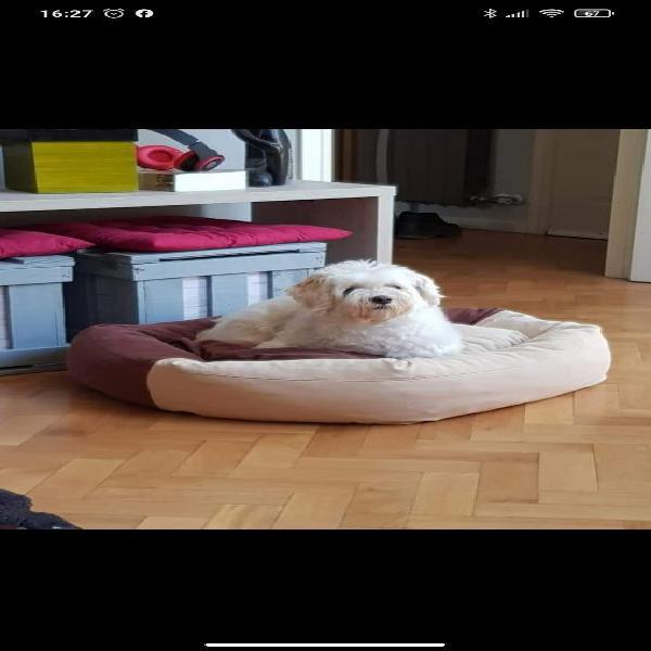Guarderia y residencia canina