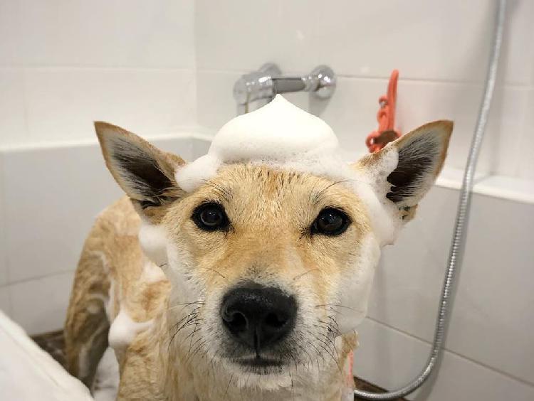 Traspaso de peluquería canina