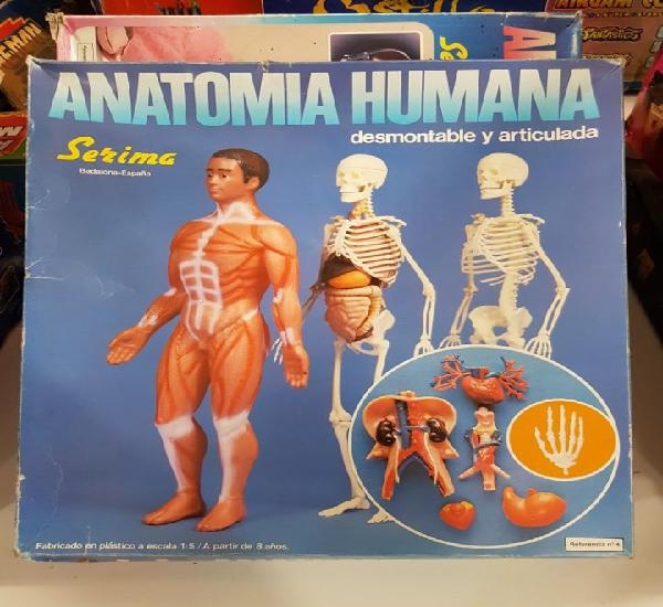 Anatomia humana serima - completa - mirar fotos