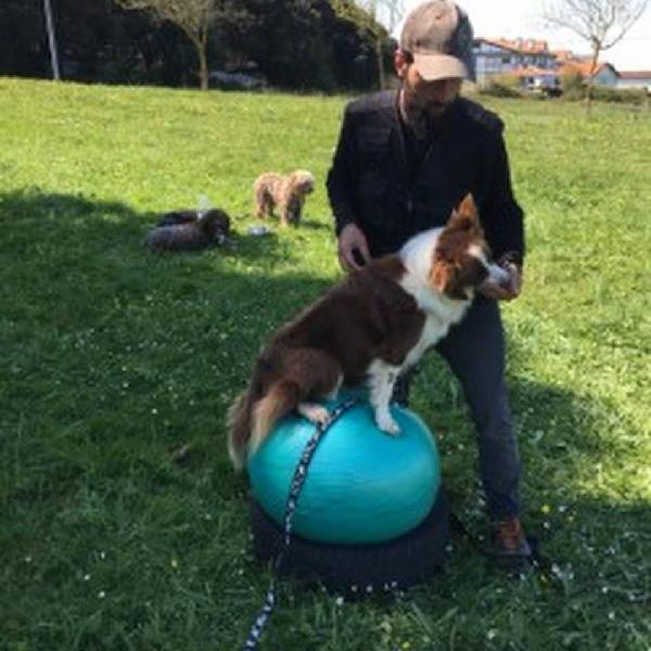 Centro canino, adiestramiento canino