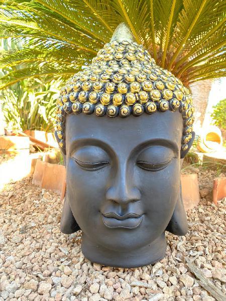 Buda nuevos de bali, producto nuevo ,venta directa
