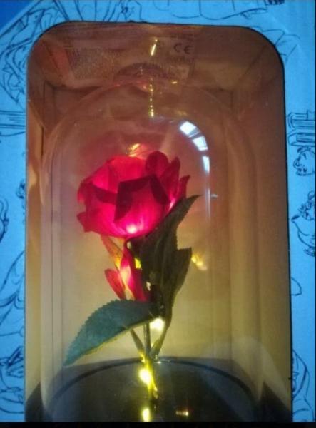 Rosa eterna encantada bella bestia disney primark
