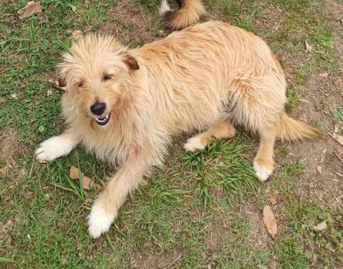 Urgentes - perro en adopción