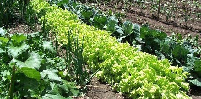 Jardinero en Asturias