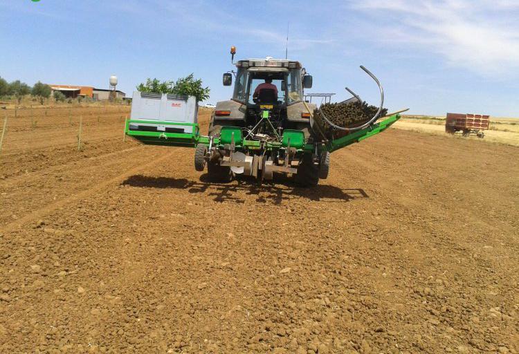 Trabajos agrícolas en Badajoz