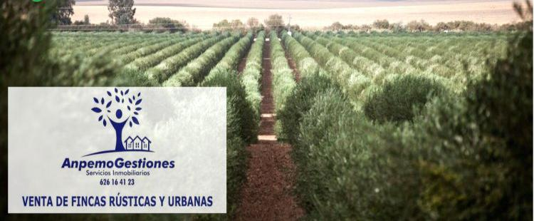 Venta de finca de olivos de regadio en córdoba