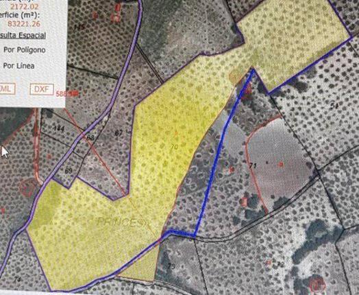 Venta de Finca de olivos en Granada