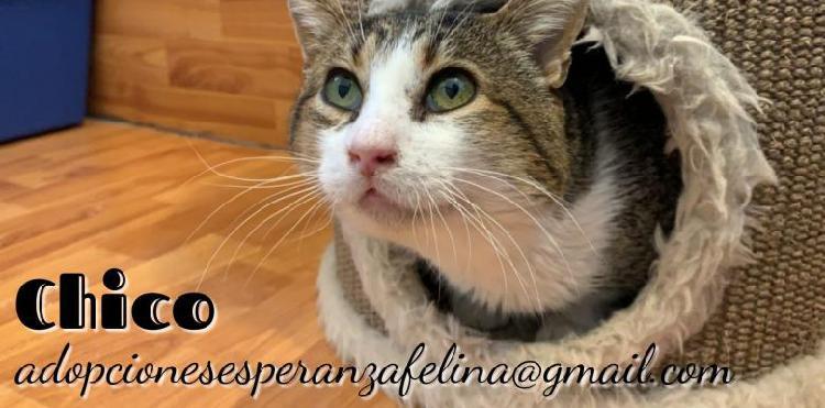 Chico en adop. álava-esp (f. n. 2006 +il)