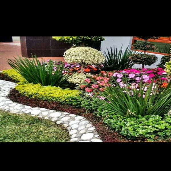 Se arreglan jardines y plantas. mucha experiencia