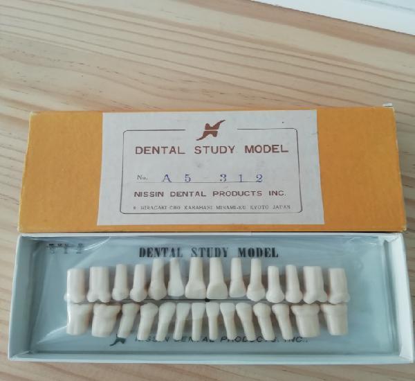 Caja muestrario de diferentes modelos de dientes
