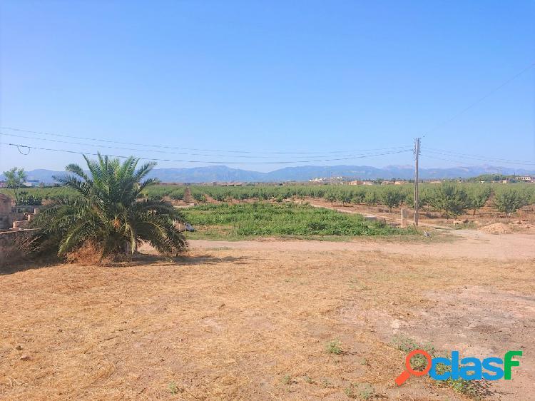 FINCA AGRICOLA EN PRODUCCIÓN EN PALMA- EN UN ENTORNO PARADISIACO 2