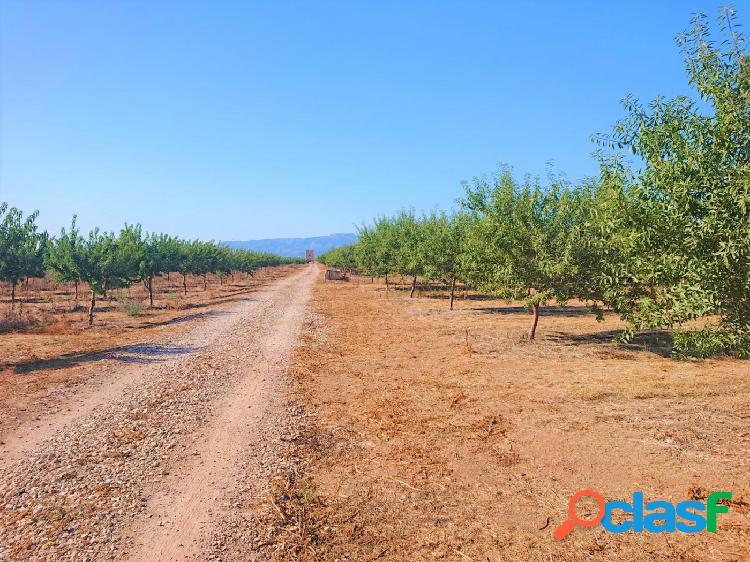 FINCA AGRICOLA EN PRODUCCIÓN EN PALMA- EN UN ENTORNO PARADISIACO 3