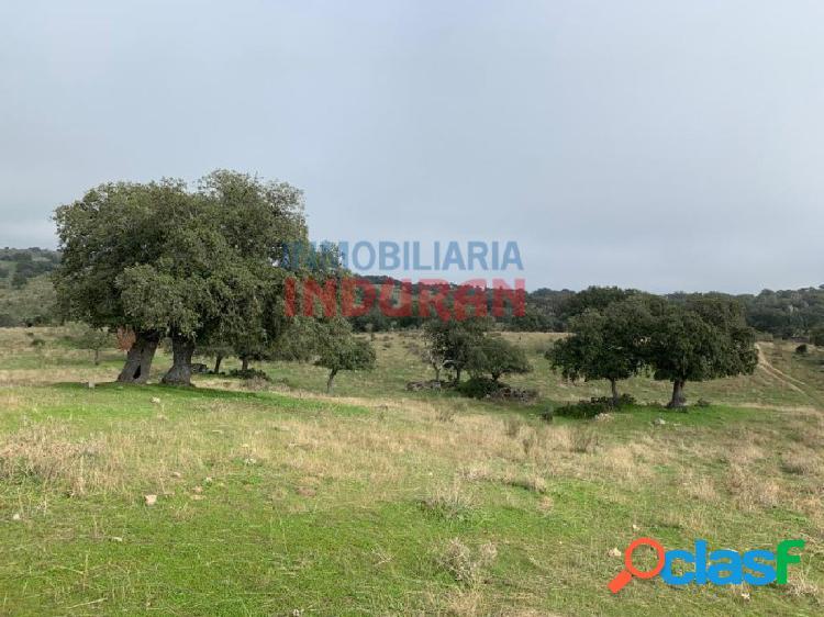 Finca rústica de 57,5 ha con encinas, cierre perimetral, una charca y una construcción de piedra situada en el término municipal de villar del pedroso (cáceres)