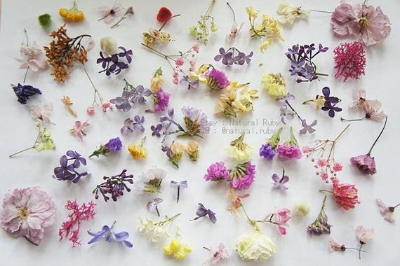 60 + mini flor seca para joyería de resina, flor para