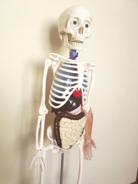 Esqueleto colección el cuerpo humano rba