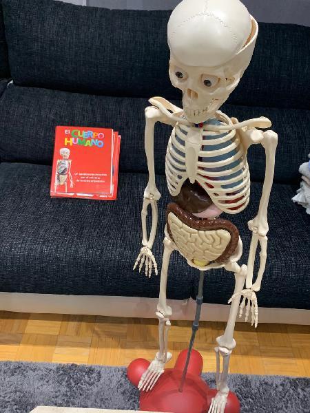 Esqueleto humano con organos
