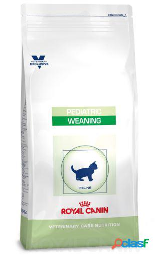 Pienso Kitten Pediatric Weaning 2 KG Royal Canin