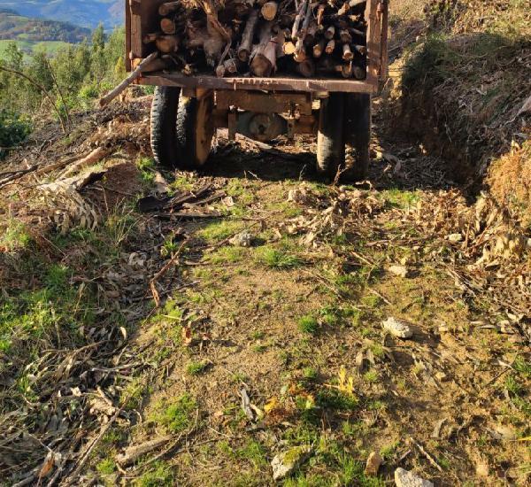 Venta de leña de eucalipto a buen precio en cantabria