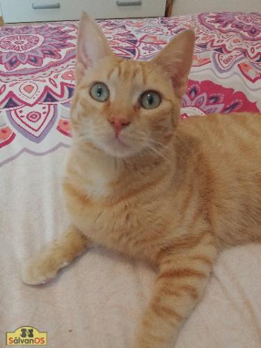 Fritz - gato en adopción