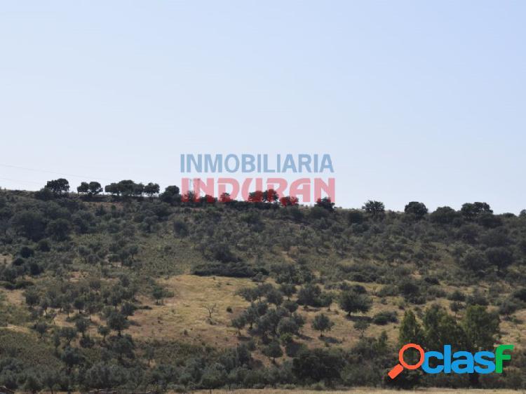 Finca rústica de 390 ha, ideal para uso cinegético y agrícola, situada en el término municipal de Logrosán (Cáceres) 2