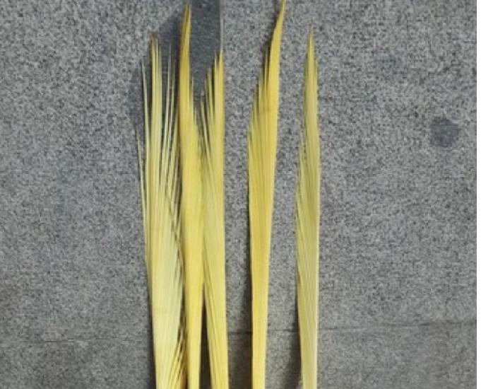Venta palmas domingo de ramos en madrid