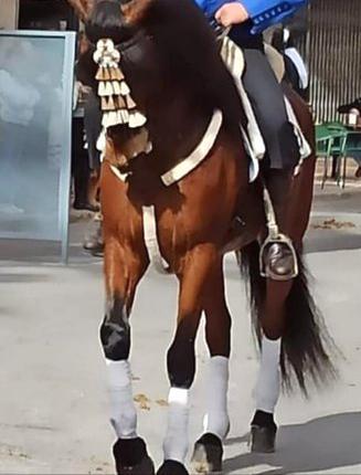 Cría selección y venta de caballos y potros en valencia