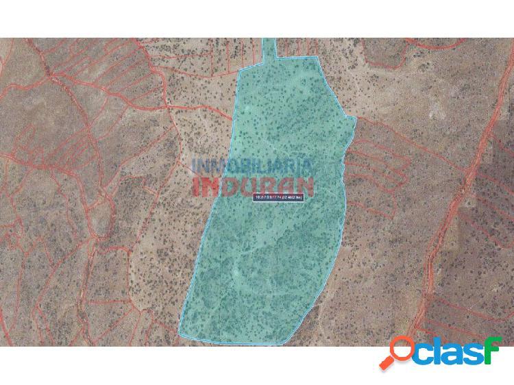 Finca ganadera de 92 ha poblada de encinas y con varias construcciones de piedra situada en el término municipal de villar del pedroso (cáceres)