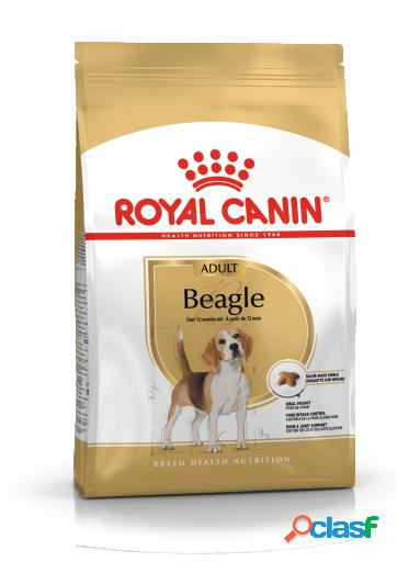 Pienso beagle adult 12 kg royal canin