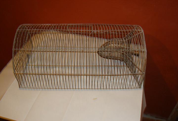 Jaula ratonera, para cazar ratones