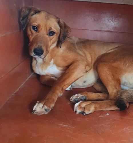 Mulan - perro en adopción