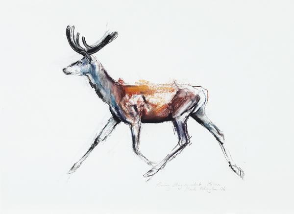 Running stag in velvet, polsen