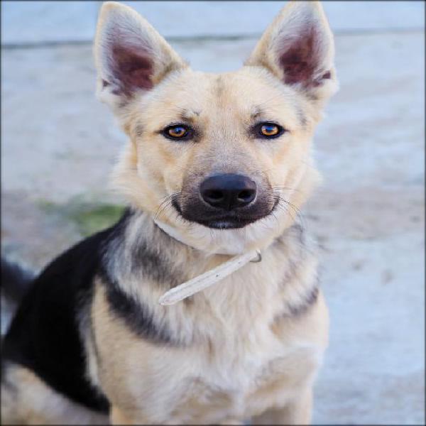 Dorian - perro en adopción
