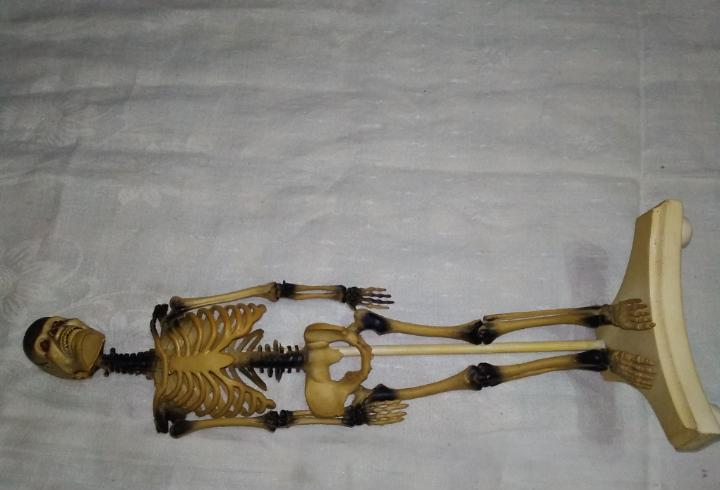 Raro esqueleto humano vintage 1973 imperial toy corp.